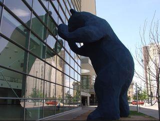 Bear colorado - Google Search